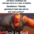 Any soil is good enough