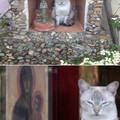 """Gato llamado Fénix, le pertenece al usuario """"DinoA29"""" ;)"""