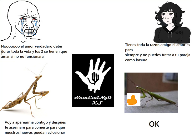 Mantis Religiosas - meme
