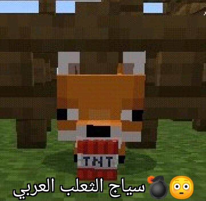 Zorro arabe - meme