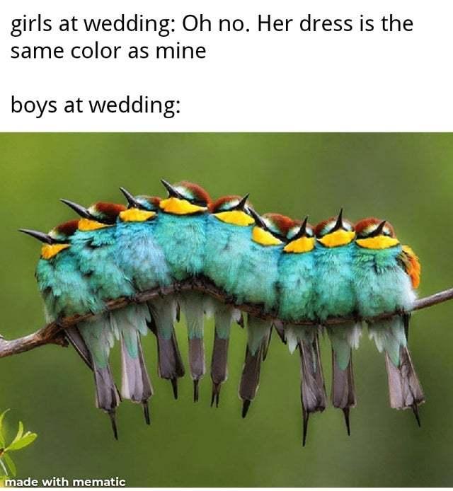Girls vs boys at weddings - meme