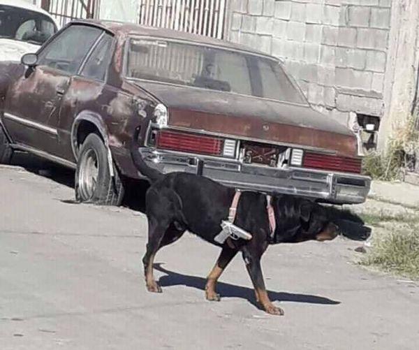 Joder perro tactico - meme