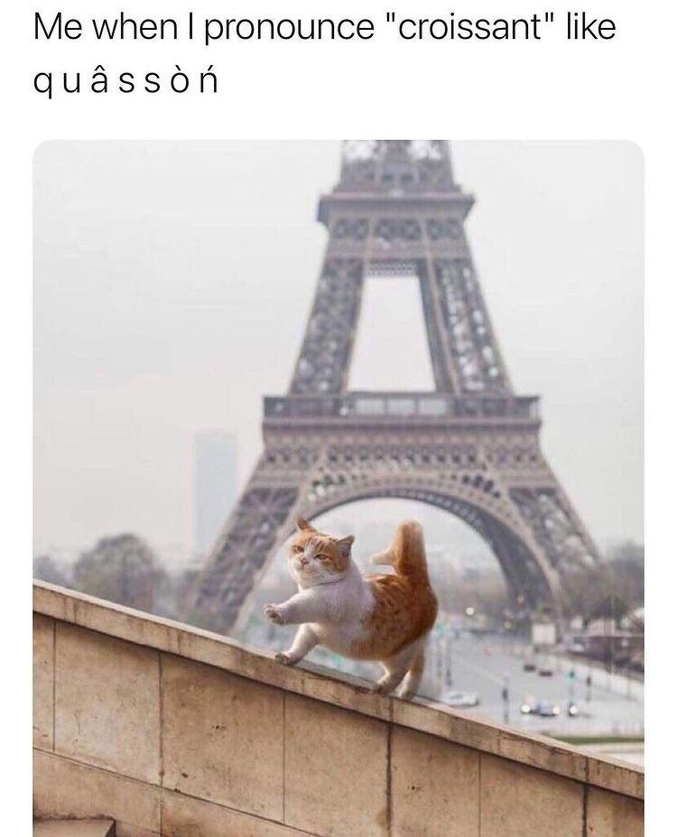 quasson - meme