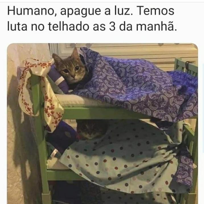 Gatinhos do Mma - meme