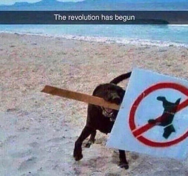 The revolution has begun - meme