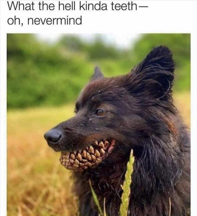 Yes spooky dowg - meme