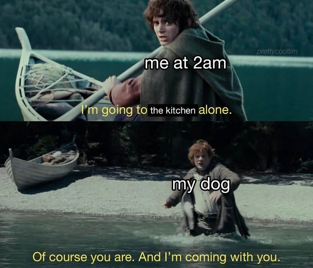 My dog always comes with me to the kitchen - meme