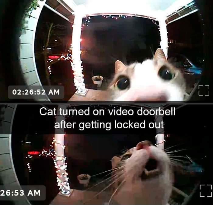 Hooman, let me in! <(0.0)> - meme