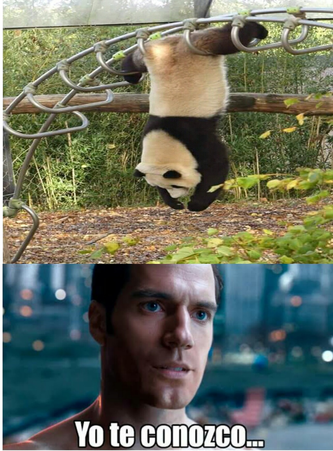 Kung fu Panda - meme