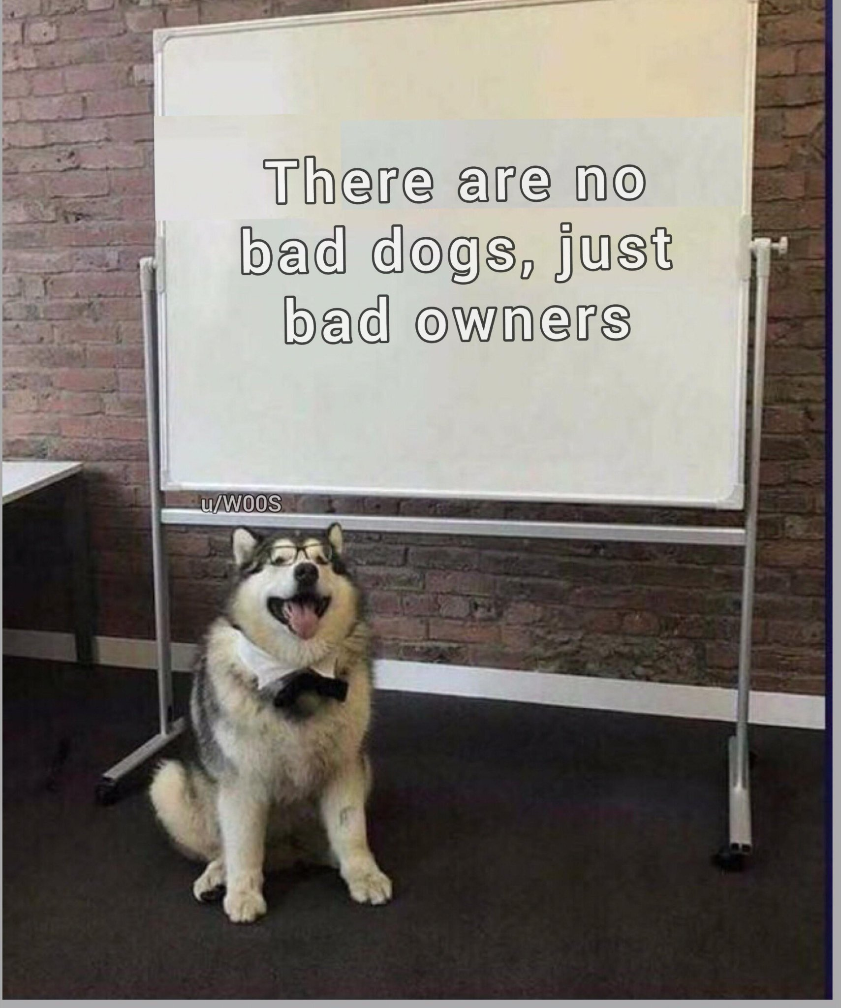 Smart doggo - meme