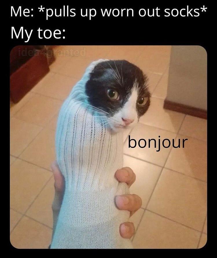 love these cat in sock pics - meme