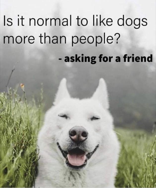 Yes doggo - meme