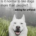 Yes doggo