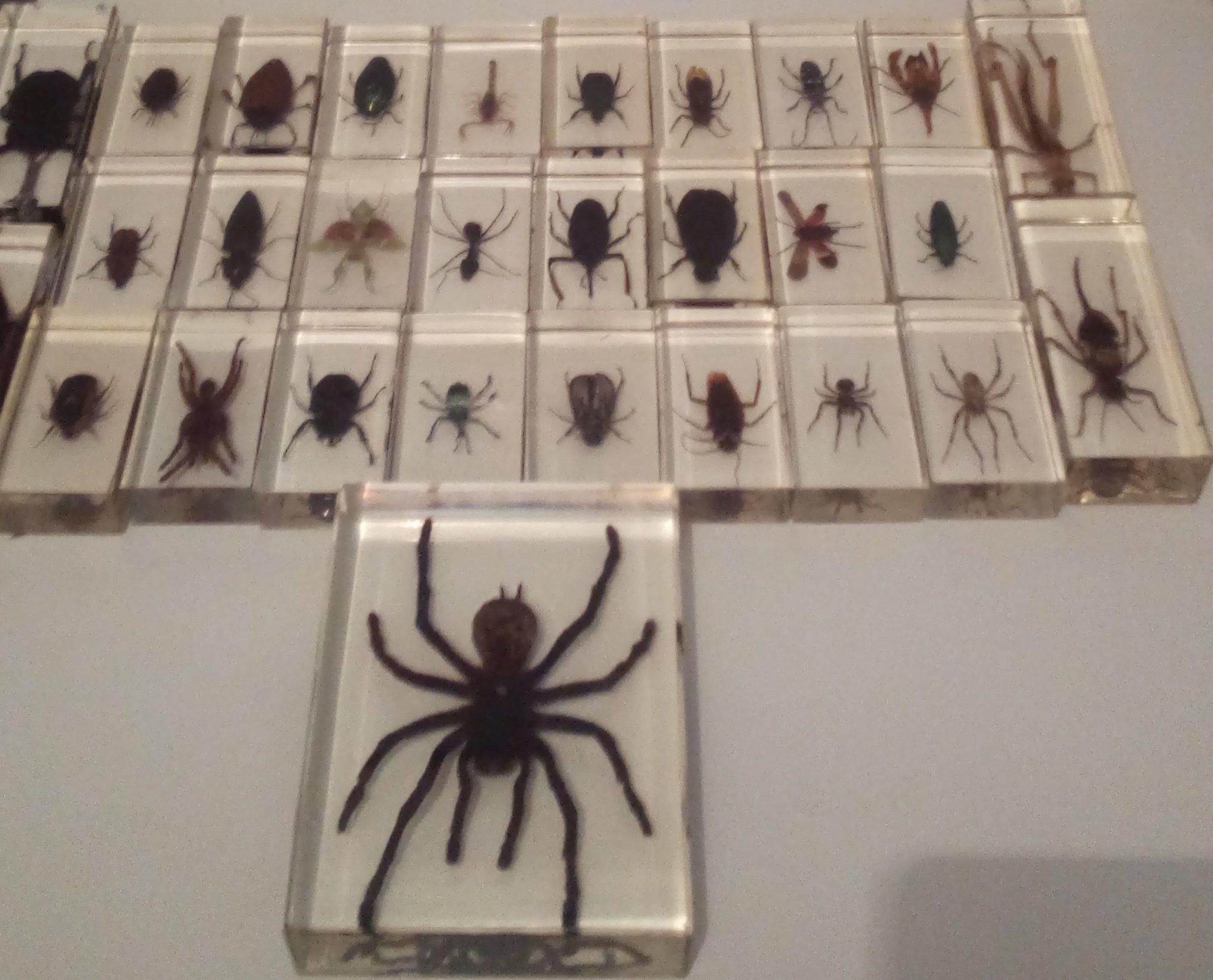 Mi colección de insectos - meme