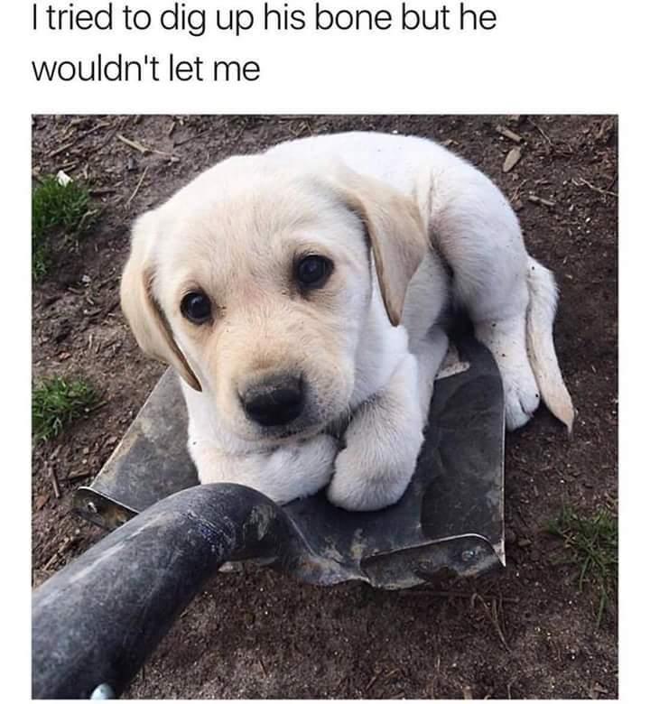 Shovel pupper - meme