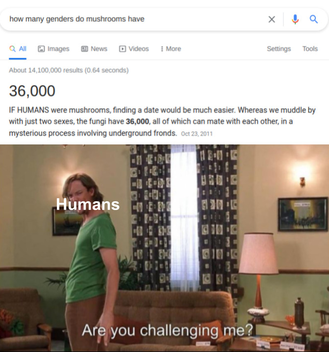Are you challenging me - meme