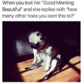 i hate pugs