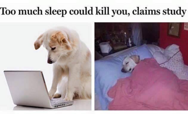 Sleep dog - meme