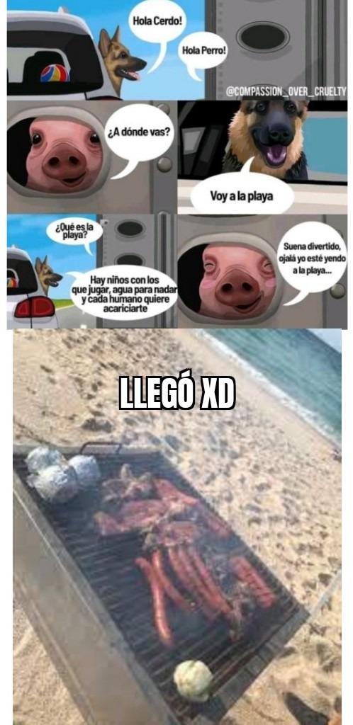 Cerdito en la playa - meme