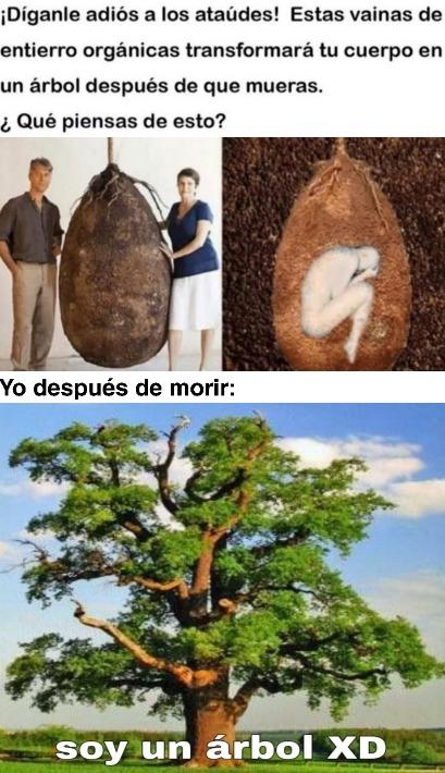 Soy un árbol XD - meme
