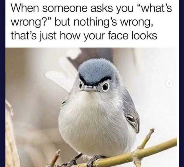Birdo - meme