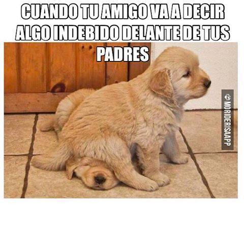 Amigos... - meme