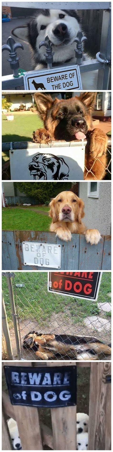 the dog... - meme