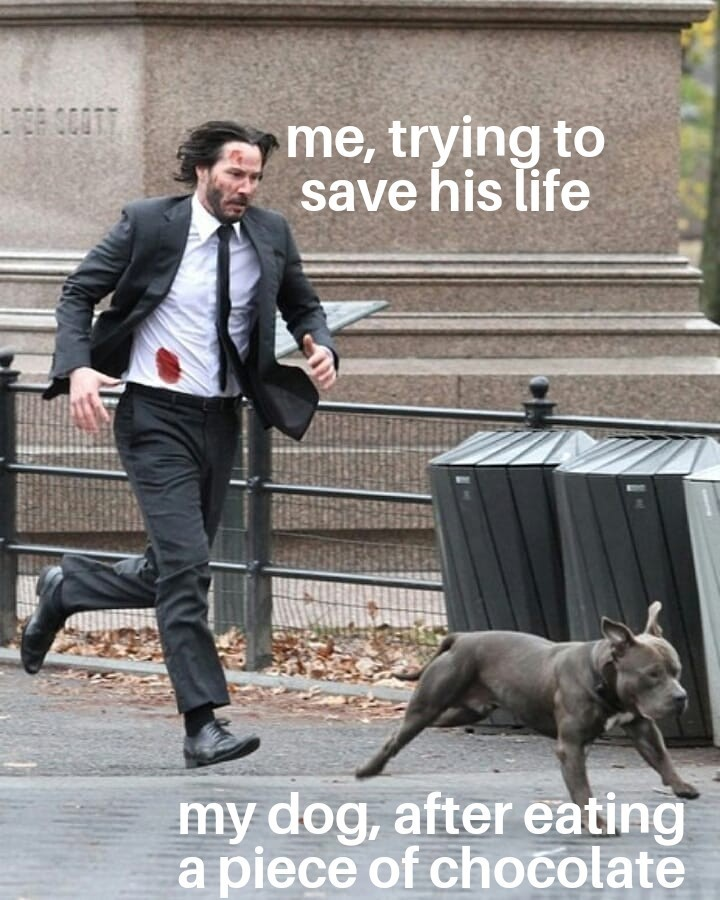 run doggo - meme