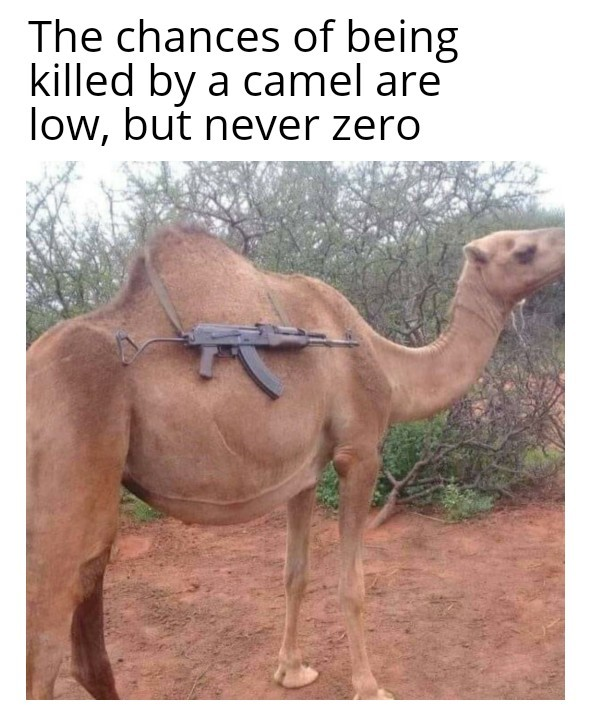 The chances of being killed by a camel are low, but never zero - meme