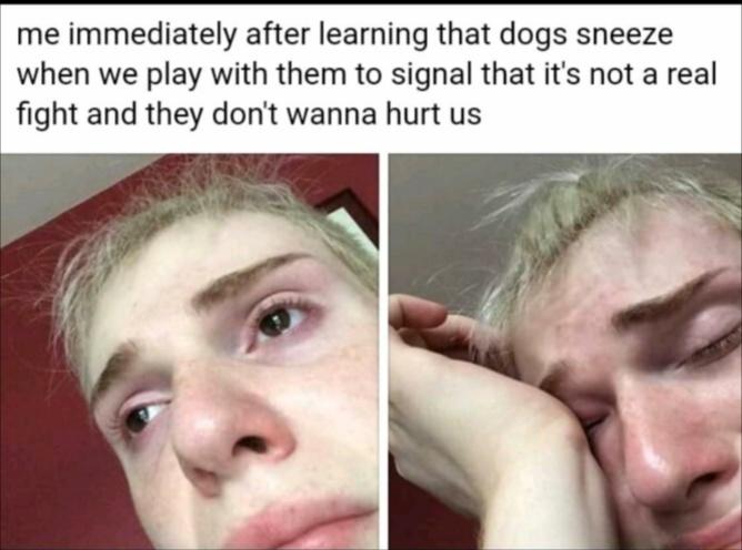 Dogs, bro - meme