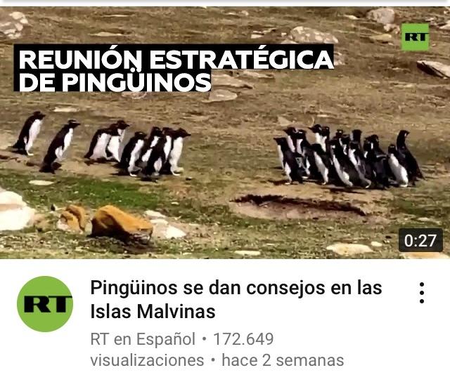 Wen pingüino táctico - meme