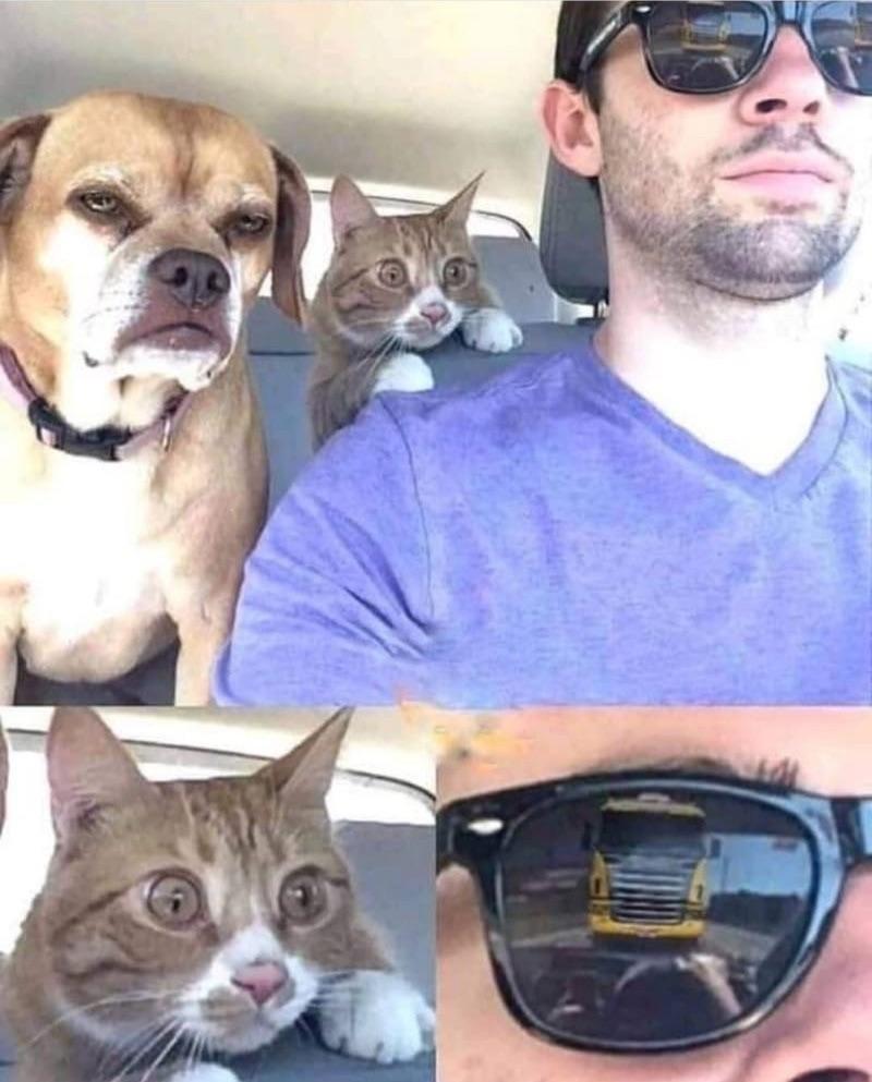 The cat knows - meme