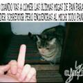 Un venezolano y su gato