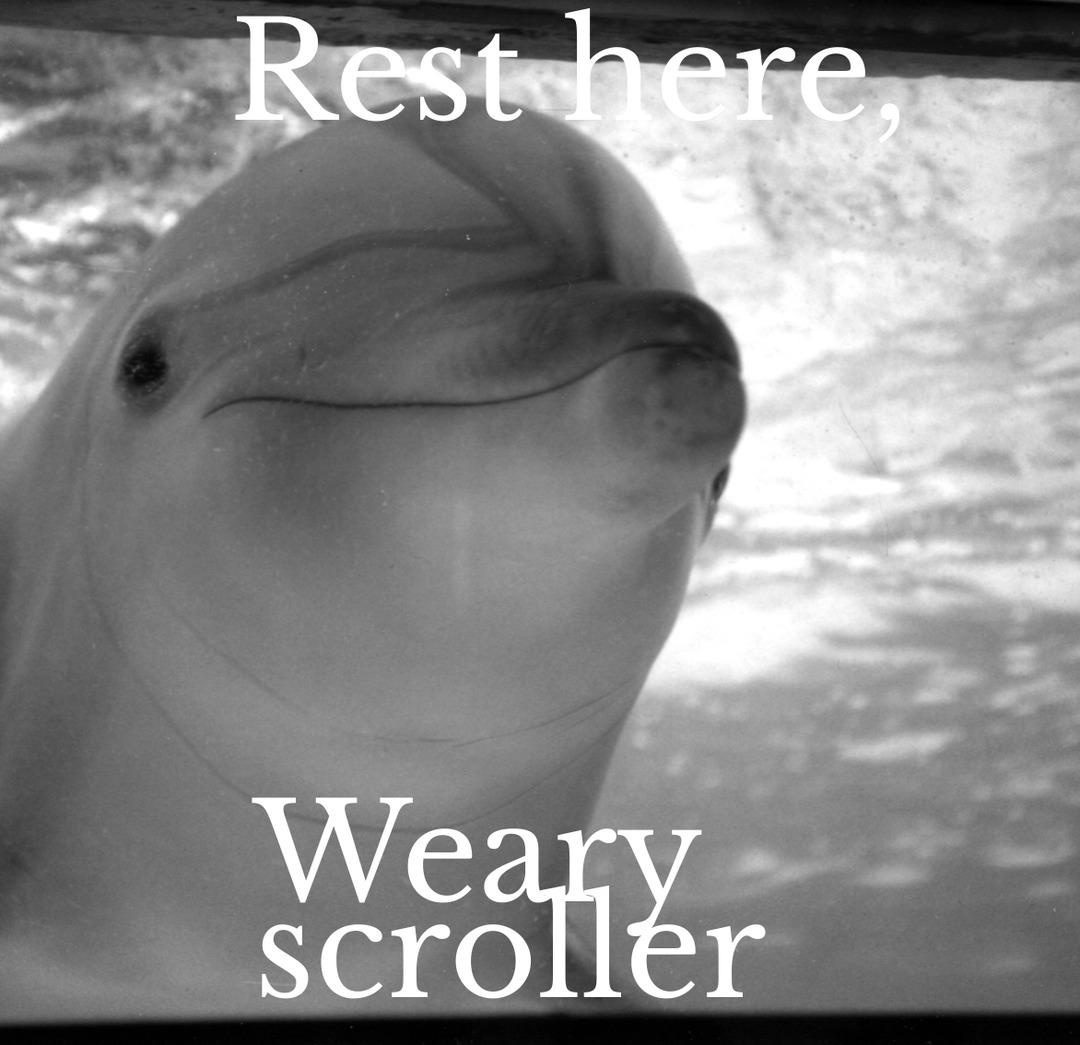 Rest, my comrade. - meme