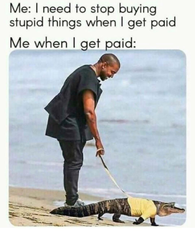 Cute pet - meme