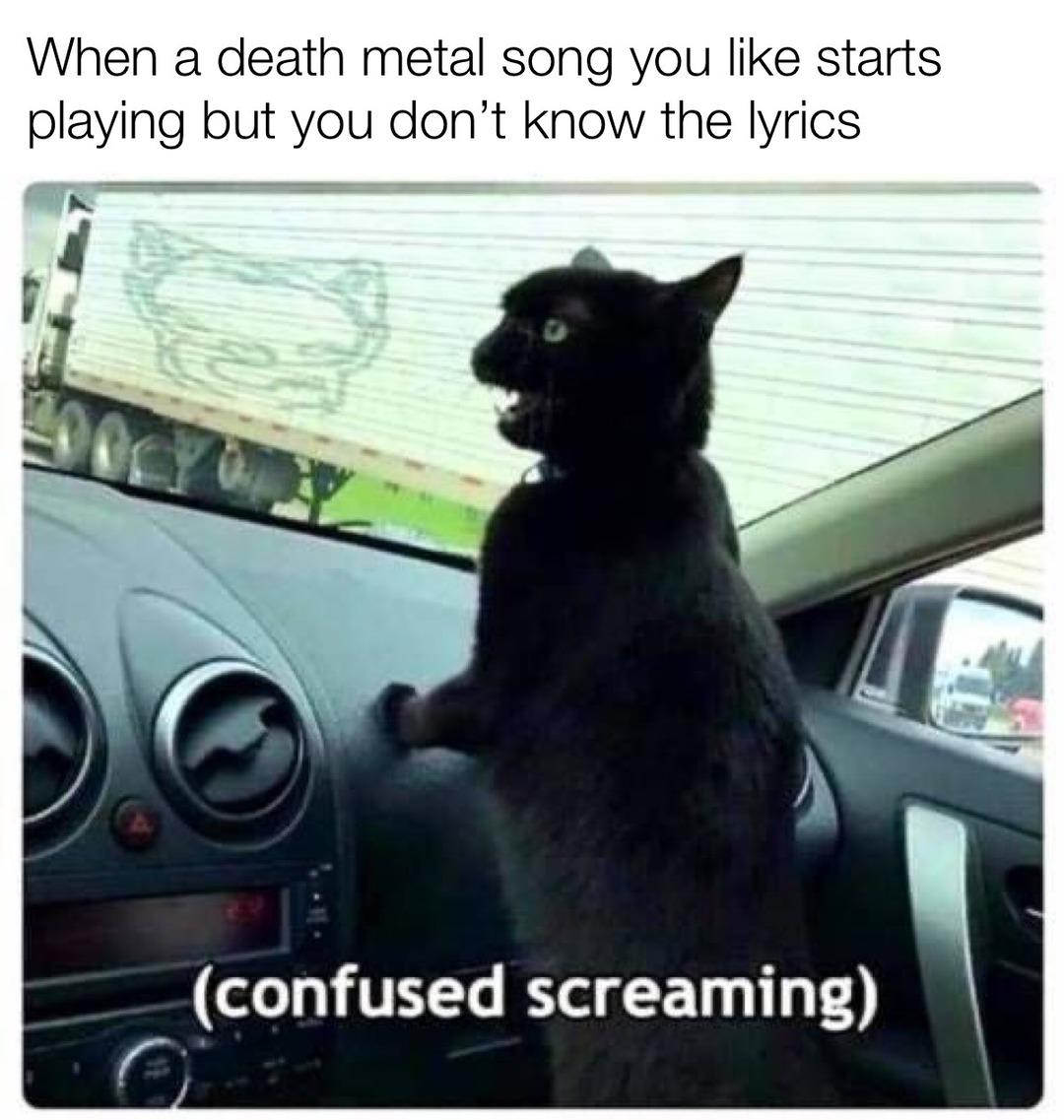 Tomcat Araya - meme