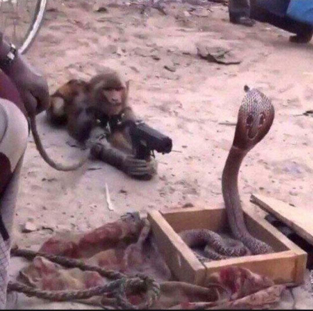 sopa de macaco e o caraio - meme