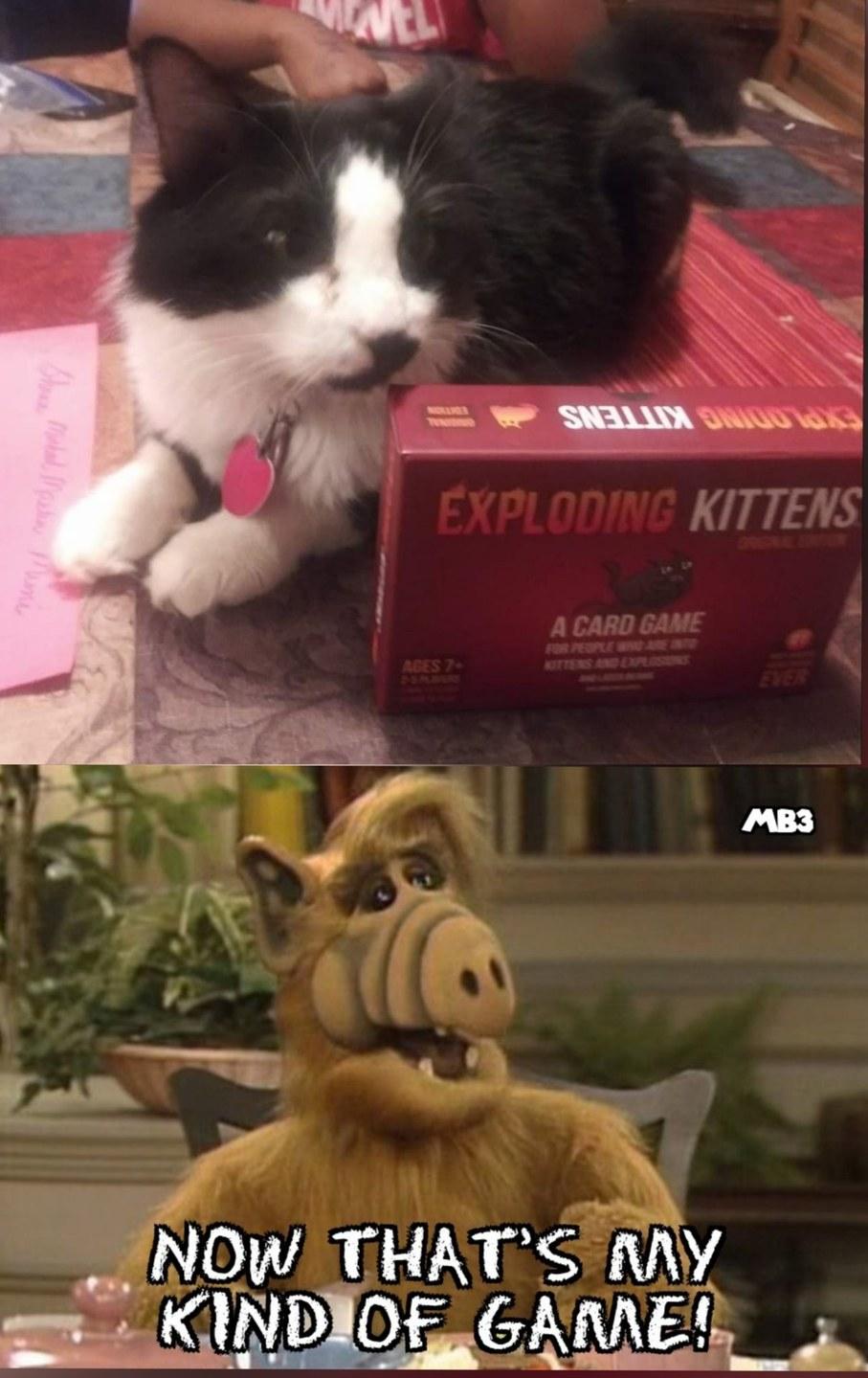 Exploding Kittens - meme