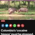 Troia hippos