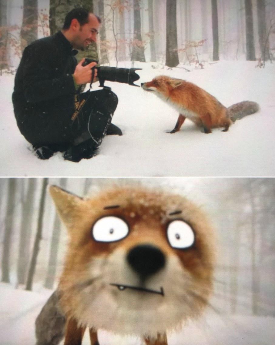 idk its a fox tho - meme
