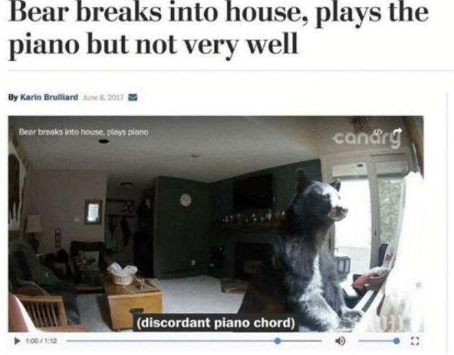 Lol bear trash - meme