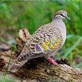 pigeon lives matter
