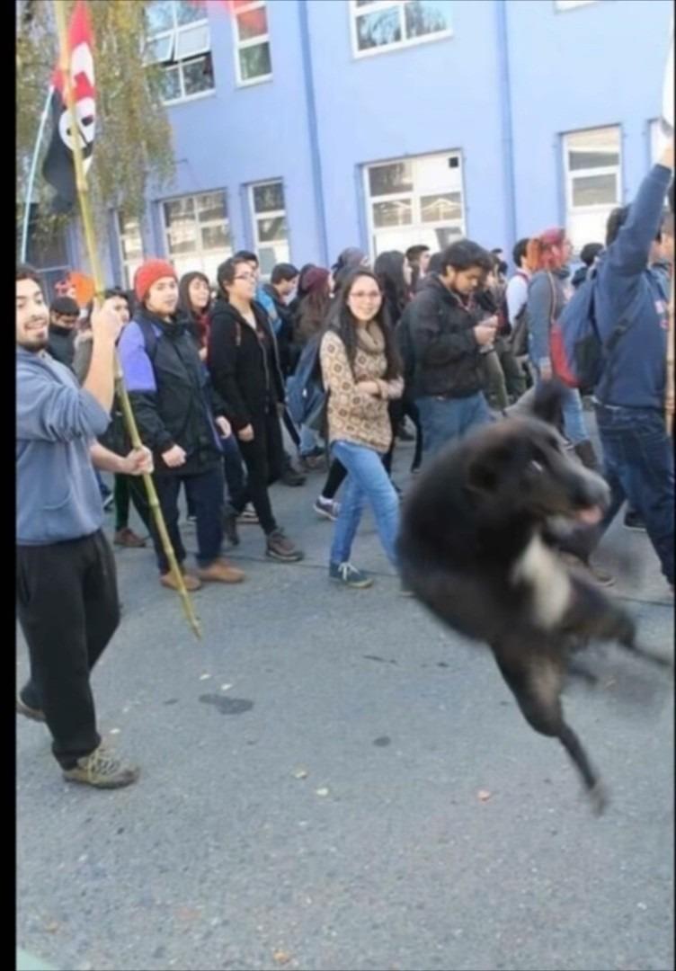 El perrito voladoooor KDKAJDKA - meme
