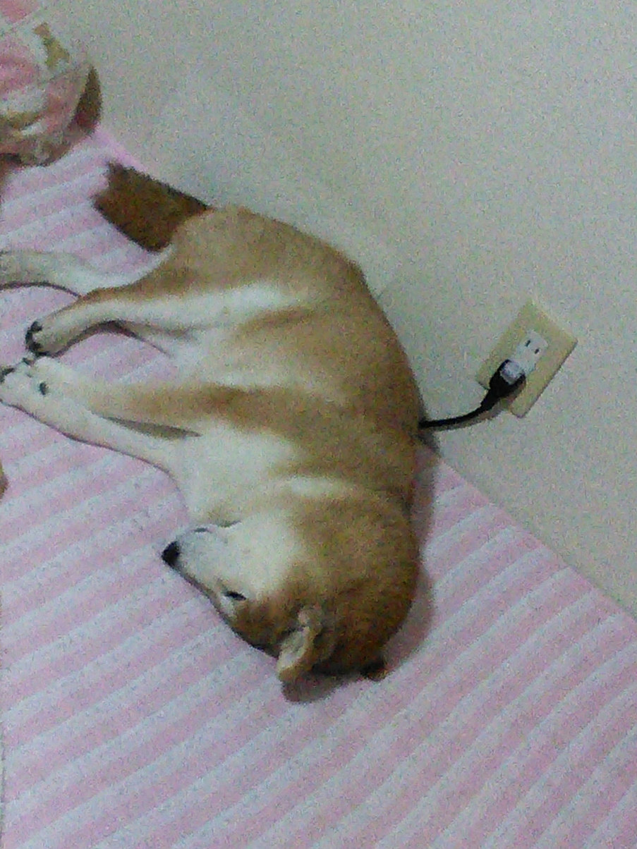 don't forget to charge your doggo when it runs out of battery - meme