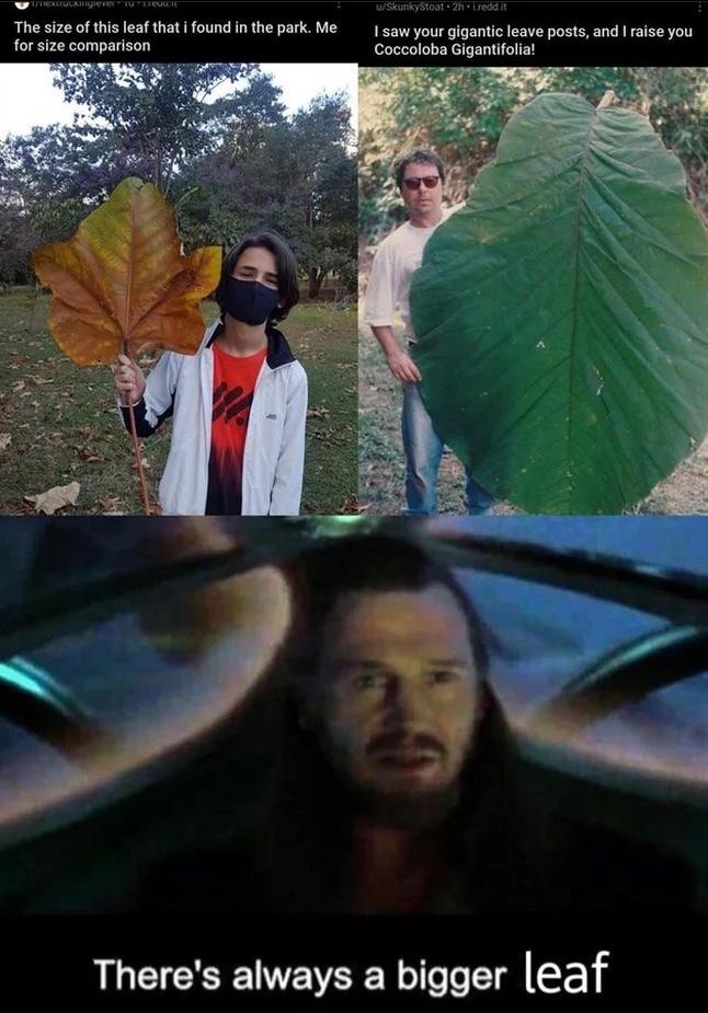 leaf - meme