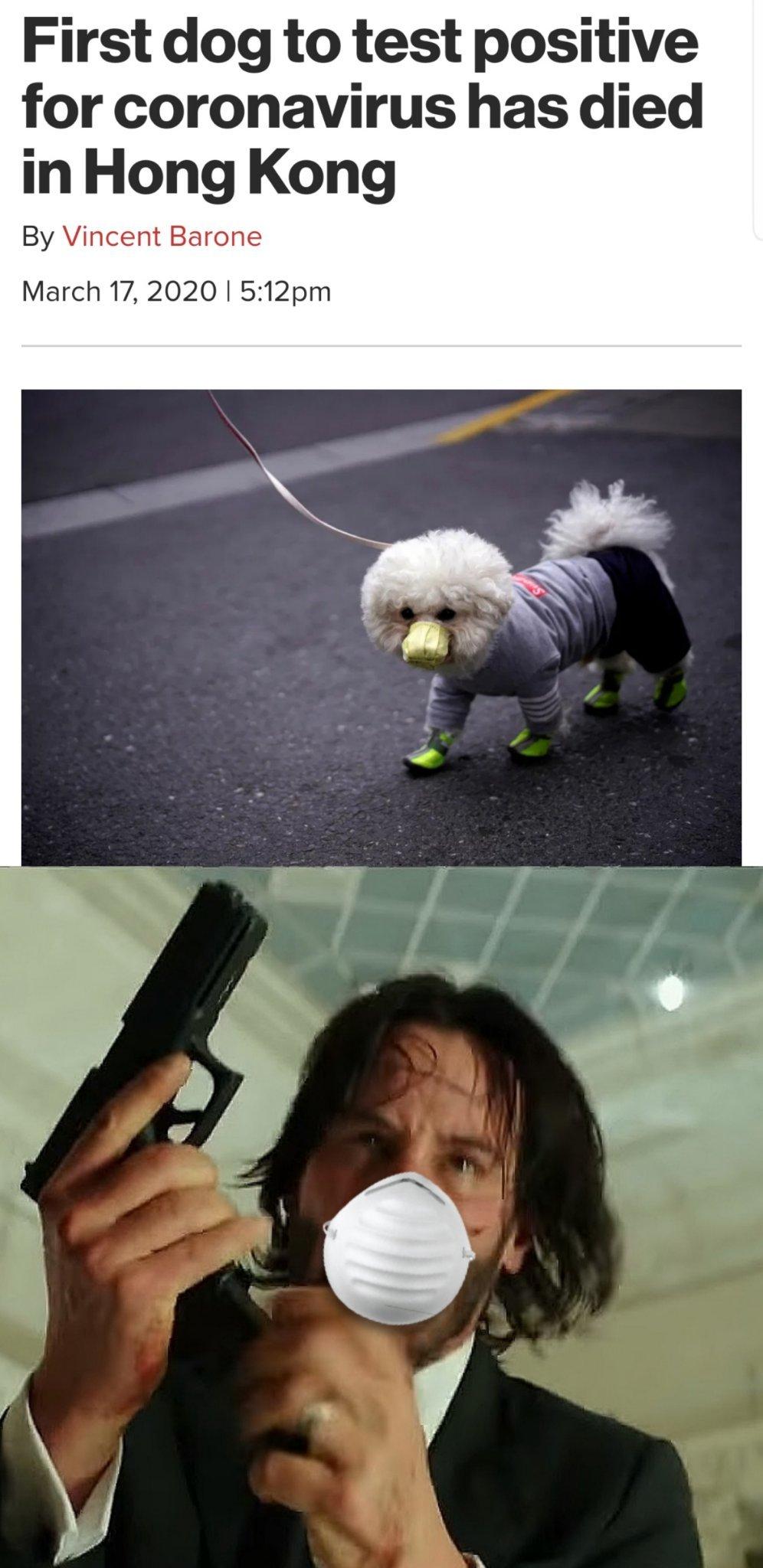 Poor doggo - meme