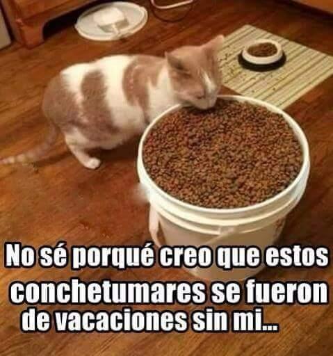 Pobre gatito :c - meme