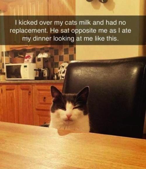 Where is my milk hooman - meme