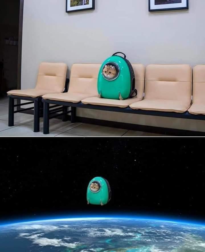 Gato Espacial - meme