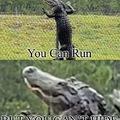 Floridian Alligator